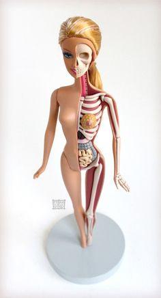 Anatomical Barbie by Jason Freeny sculpture Barbie anatomy