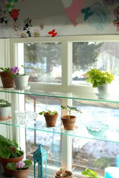 shelves-in-the-kitchen-above-the-window.jpg 480×720 pixels