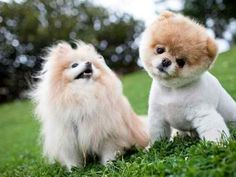 i need that fluffiness in my life!