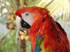 34 Stunning Pictures Of Exotic Birds How Beautiful, Beautiful Birds, Beautiful Pictures, Terriers, Pink Cockatoo, Bird Wallpaper, Bird Pictures, Exotic Birds, Bird Feathers