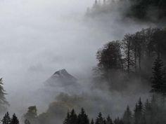 Der Schwarzwald im dichten Herbstnebel