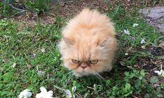 Este é Garfield, o Gatinho mais Mal-Humorado do Mundo