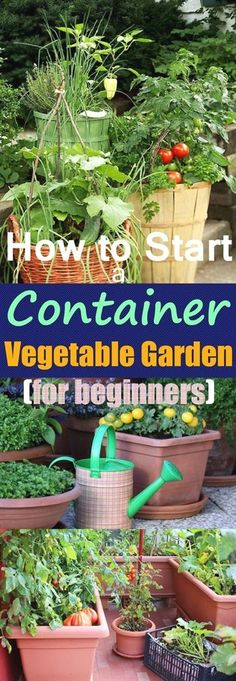 Growing vegetables in pots is an excellent idea if you have a limited space, starting your own container vegetable garden gives you a chance to produce a bountiful harvest of edibles that are freshest…MoreMore #ContainerGardening