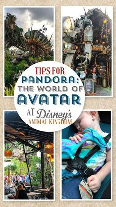 Best tips for guests traveling to Pandora: The World of Avatar at Disney's Animal Kingdom park at Walt Disney World.