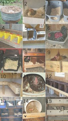 If you've got birds for egg laying purposes, you may need to consider getting nest boxes. You can buy a variety of nest boxes either online or at farm supply stores, but there are many cheap options.