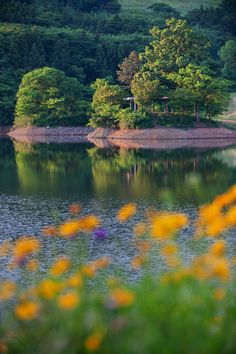 Morning light, by Heonyong LIM..... #lake #pond #standingwater #idyllic #tree #scenery #scenic #lushfoliage #flower #green Beautiful Photos Of Nature, Beautiful Nature Wallpaper, Nature Images, Nature Photos, Picture Photo, Photo Art, Landscape Pictures, Morning Light, Scenery