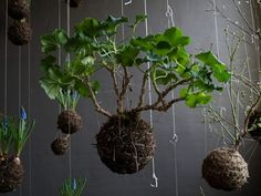 Out Of The Planter Box: Inspiring Ideas For Indoor Gardens