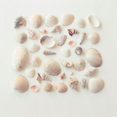 To know more about beautiful! sea shell collection, visit Sumally, a social network that gathers together all the wanted things in the world!