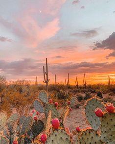 JTH Tucson