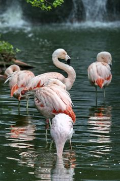 Camargue Natural Park, River Rhone Delta, France ~  western Europe's largest river delta (360 sq miles) ~ one of the last bird sanctuaries in Europe. Flocks of greater and pink flamingos nest here every year.  Photo: Marian Gutu, DeviantArt