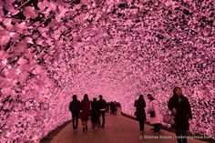 Nabana no Sato (なばなの里) is a theme park on the island of Nagashima in Kuwana, Japan Nabana No Sato, Pink Love, Pretty In Pink, Hot Pink, Perfect Pink, Beautiful World, Beautiful Places, Amazing Places, Everything Pink