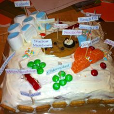 Mercedes Science Project  Plant Cell