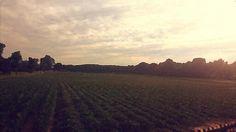 south jersey fields