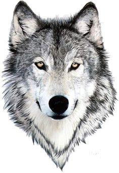 Sister Tattoo Ideas For 2 - Cool Tattoo Chest - - Tattoo Family Tiere - Tattoo Art Skizze - Wolf Tattoos, Wolf Face Tattoo, Fake Tattoos, Tatoos, Circle Tattoos, Tattoos For Guys, Wolf Tattoo Design, Art Adulte, Tattoo Sticker