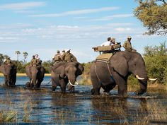 Abu Camp | Signature African Safaris