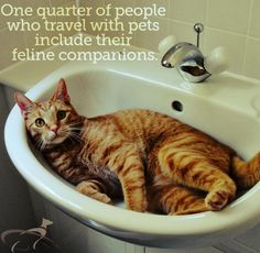 1/4 of people who travel with pets include their cats, @PetRelocation survey finds