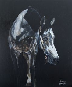 Original, vibrant equine paintings by James C. Byrne Artist capturing the essence of the individual horse. Grey Art, Equine Art, Saatchi Art, Original Paintings, Birds, Horses, Canvas, Artist, Prints