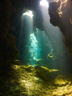 The perfection of nature. under the sea. Underwater Caves, Underwater World, Beautiful World, Beautiful Places, Deep Blue Sea, Underwater Photography, Ocean Life, Marine Life, Under The Sea