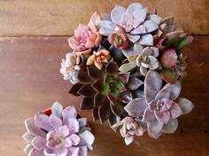 succulents are the only plants i can keep alive