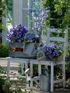 Old chairs, crates and flowers