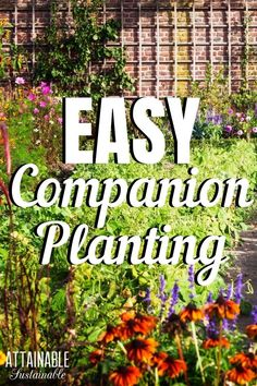 Companion planting repels pests & boosts your garden's health. Try adding herbs like dill, chives, and rosemary and flowers like marigold and nasturtium to your vegetable garden to help it thrive.