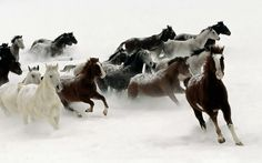 Winter Scaping Horses  www.wallpaperhere.com