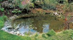 planning the wildlife pond...useful info from this to make a pond!