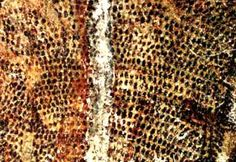Cuevas de Lian Karim, Borneo (Indonesia) 10.000 a. de C.
