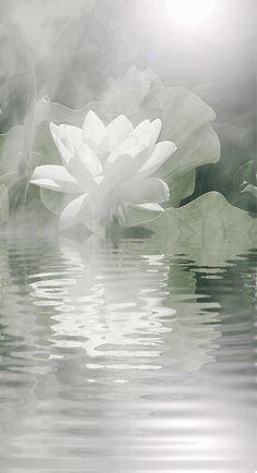 lotus tattoo..