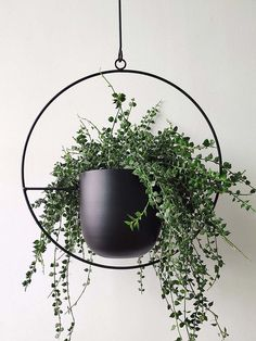 Home Interior Velas RISEON Boho Black Metal Plant HangerMetal Wall and Ceiling Hanging Planter Modern Planter Mid Century Flower Pot Plant Holder Minimalist Planter for Indoor Outdoor Home Decor (Style A): Garden & Outdoor.Home Interior Velas