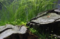 Local River by Orchid. #aquascaping
