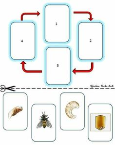 Montessori, Toddler Learning, Play To Learn, Forest Animals, Olay, Life Cycles, Worksheets, Cards, Insects