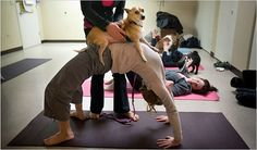 Yoga With Your Dog: Doga -   http://www.nytimes.com/2009/04/09/fashion/09fitness.html