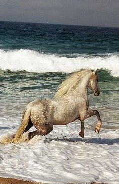 #moodboard #inspiration #white #horse #sea #running #blue #sky #white #wave #back