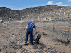 Prescott firefighter Wade Ward touches a Granite Mountain Hot Shots crew shirt draped over a burned cactus on July 23 in Yarnell, Ariz. The fenced site is where 19 firefighters died battling an Arizona wildfire on June 30.  Matt York, AP