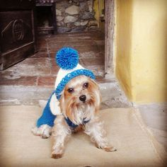Hand-knit Dog Sweater / 100% Pure Soft Wool / Blue , White & Green /Fashion Pet