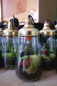 Spruitje: een duurzame wereld in een lamp. Spruitje is een 'sustainable world', het kindje van bedenker Jonael van der Sloot. www.eatpurelove.nl