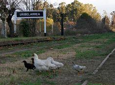 Construirán un complejo de cabañas en Uribelarrea http://www.rural64.com/st/turismorural/Construiran-un-complejo-de-cabanas-en-Uribelarrea-5589