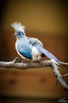 Indy Zoo Bird