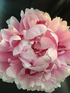 Botanical Flowers, Exotic Flowers, Pretty Flowers, Sugar Flowers, Faux Flowers, Silk Flowers, Beautiful Flowers Wallpapers, Peonies Garden, Flower Quotes