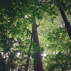 Looking up at Umstead Park.