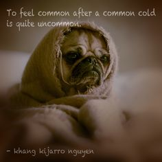 To feel common after a common cold is quite uncommon. - khang kijarro nguyen #kijarro #quote #commoncold #common #uncommon #feelnormal