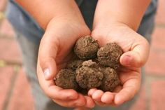 Sabrina's Witchy Wonderland: Seed Balls - Winter Project for Spring Readiness Seed Balls Recipe, Seed Bombs, Earth Day Activities, Winter Project, Herb Seeds, Wildflower Seeds, Growing Herbs, Garden Crafts, Dream Garden