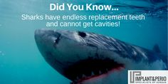 Sharks' teeth are covered with fluoride. They don't need a toothbrush because they can't get cavities. Also... whenever a shark loses a tooth, a new one grows in its place. Some sharks have over 50,000 teeth in a lifetime. By the way... YOU'RE not a shark. Call us at (316) 683-2525 to book a consultation.