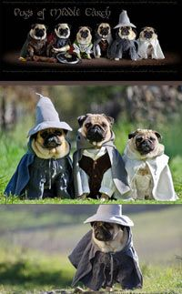 These Pugs are ready for adventure…