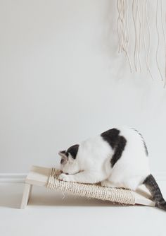 hmm, diy cat scratch board with sisal rope and two pieces of wood, looks like....
