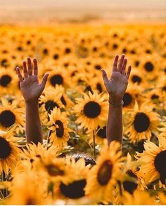 Wedding rings on a sunflower wedding flowers rings bright yellow Beautiful Flowers, Beautiful Pictures, Poem Beautiful, Amazing Photos, Sunflower Photography, Art Photography, Sunflower Pictures, Sunflower Wallpaper, Sunflower Fields