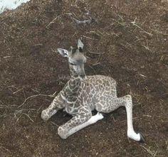 Greenville, South Carolina, Zoo's new baby!
