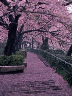 What to do in Tokyo, Japan? « Travel . Culture . Food
