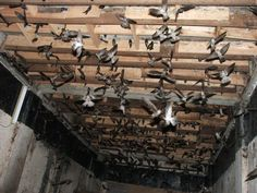 Mô hình sản xuất tân tiến : Nuôi chim yến trong nhà.Vật liệu, không gian mô phỏng môi trường sống thật của chim yến. Swiftlet Nest, Firewood, Birds, Interior, Pictures, Animals, Photos, Woodburning, Animales
